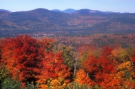 A photo by John Burk showing trees during the fall with mountains in the background