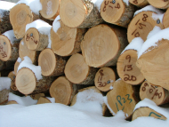 close-up on the ends of 20 cut logs stacked in winter snow, some with tracking numbers spraypainted on them