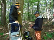 Scientists Tim Rademacher and Kyle Wyche measure respiration on the trunk of an oak tree in a forest in summer