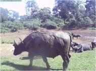 A representative photo from Kenya of a water buffalo at a watering hole.