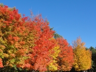 Trees showing fall foliage and a blue sky in the background.