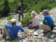 Whitebark pine research group at work in Alberta, Canada