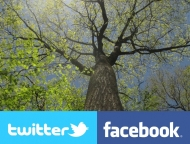 screenshot of the Witness Tree webcam showing the tree's canopy in spring, along with logos from Facebook and Twitter