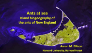 Ants at Sea: Island Bio Geography of The Ants of New England by Aaron M. Ellison