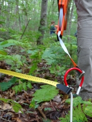 a scientist loops a transect measuring tape through a stake on the forest floor