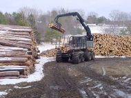 Logs being loaded for transportation