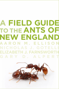 Field Guide to the Ants of New England