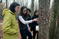 Pamela Templer studying impacts to trees from snow
