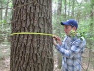 Pat O'Hara measures this tree's DBH, or diameter at breast height.