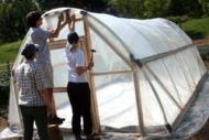 Hoop house for ragweed experiment