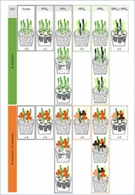 Figure from Nature Ecology and Evolution
