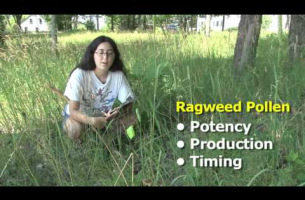 Ragweed  Pollen Hotspots -- Kristina Stinson