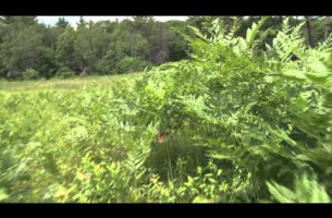 Butterfly Habitat in Massachusetts -- Elizabeth Crone