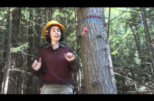 Hemlock Removal Experiment -- Clarisse Hart, Simes