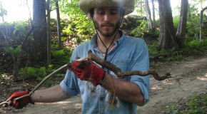 Summer Student examines root