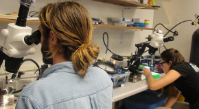 Summer Students examine samples under a microscope
