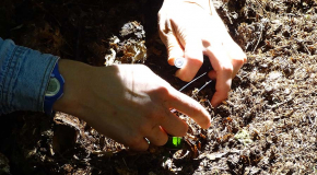 Picking Ants to Sample