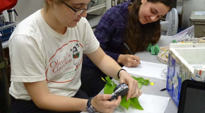 Students Working on Leaves