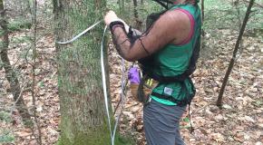 Summer Student takes diameter measure of tree