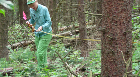 Summer Research Program Student Measuring a Transect