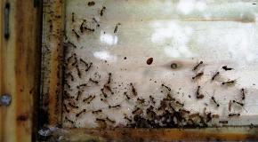 Ant nest on Prospect Hill