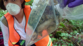 Aly Degrassi with Southern Flying Squirrel