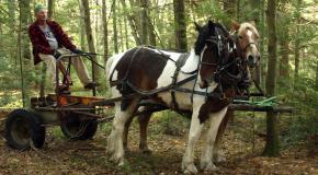 Horses Moving Equipment
