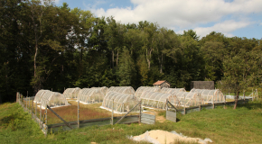 Hoop-Houses For Conducting Common Ragweed Experiments