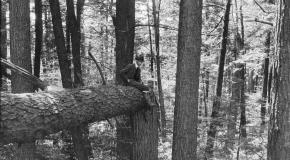 Man on Fallen Tree in Pisgah Tract
