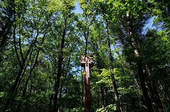 "[Taking ""Bucky"" up into the canopy to remove PhenoCam equipment. Photo by Johnny Buck]"