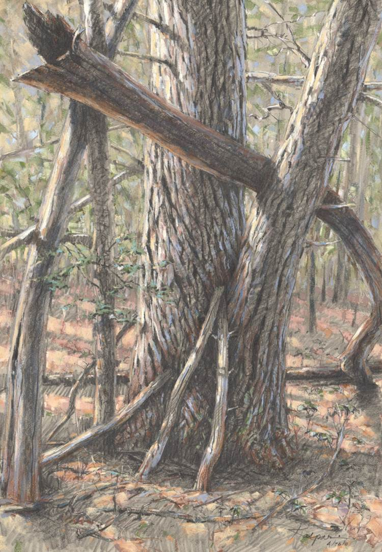 Chestnut remnant drawn by artist