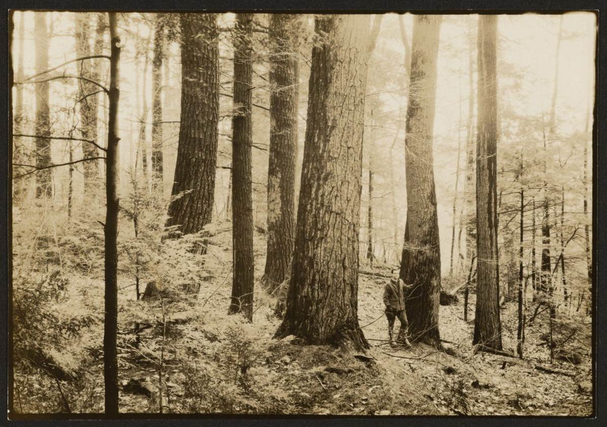 Pisgah Old Growth Forest