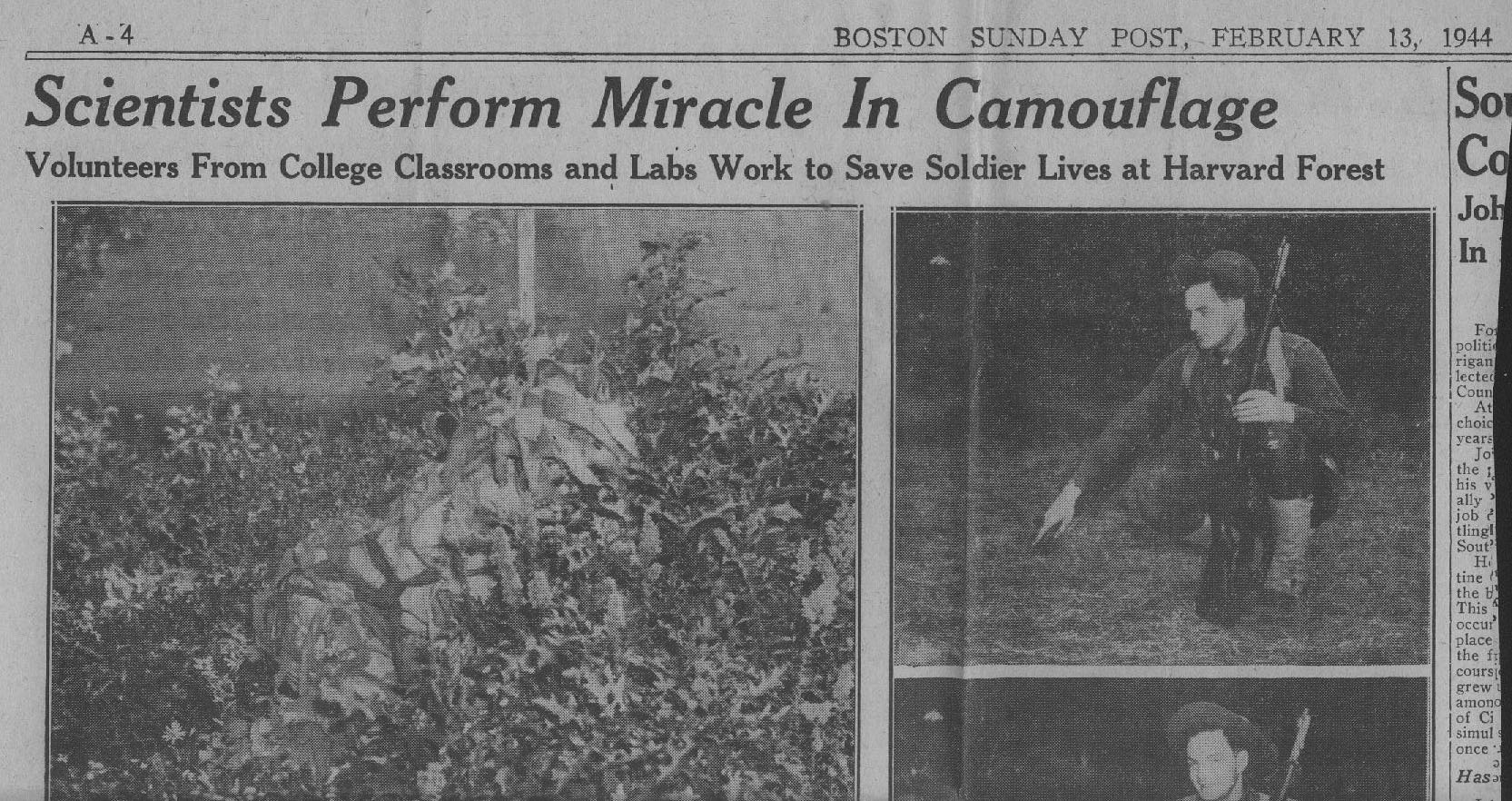 Camouflage Research Article