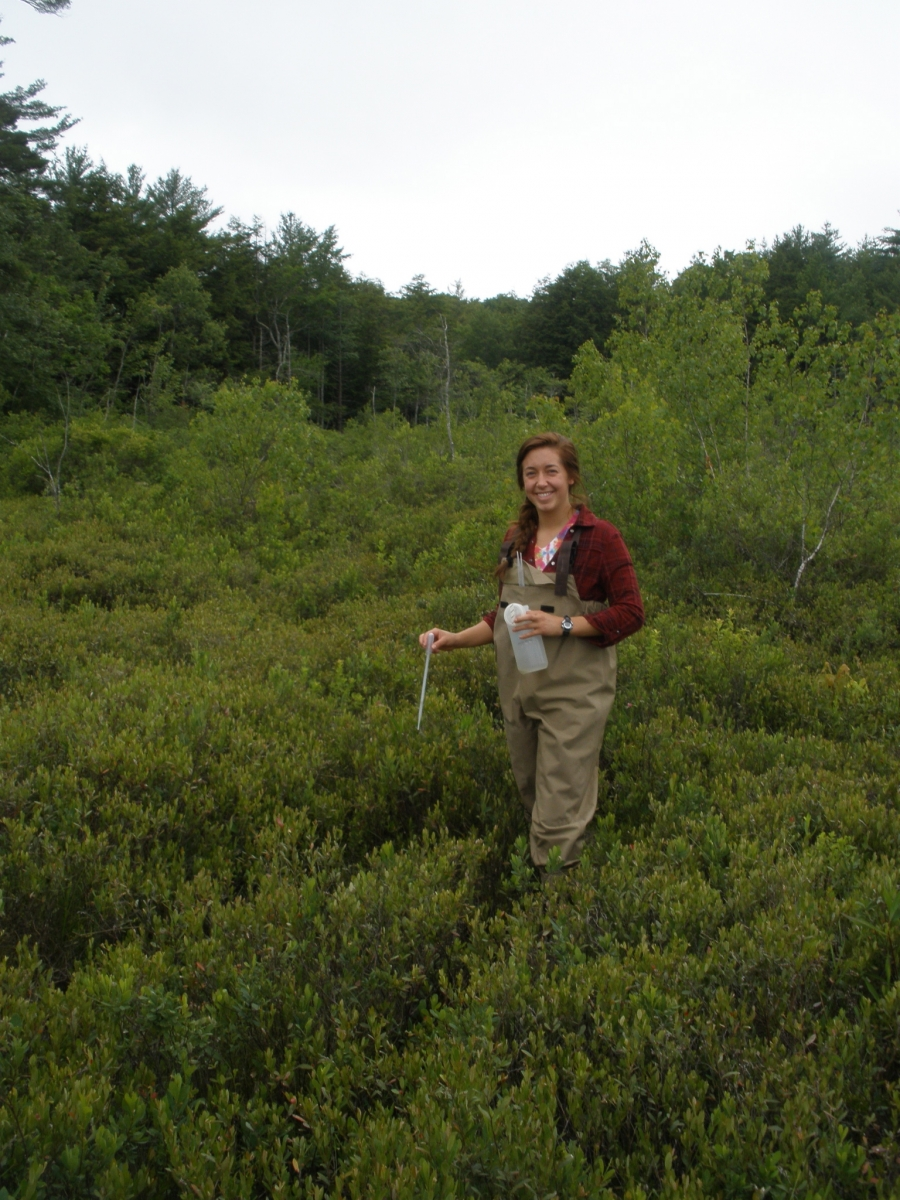 Harvard Forest: Press Resources: Pitcher Plants As Models For Ecosystem