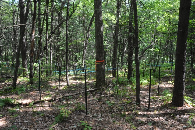 [As of early September, 2008, locations for all chambers have been staked out, and wall construction has begun. Shown here is one of the Warm Ant chamber locations. The red oak tree with the orange ribbon is in the center of the octaganal chamber footprint.]