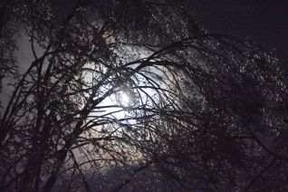 Full moon through icy trees