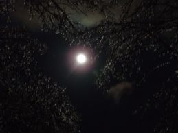 Full moon ice storm