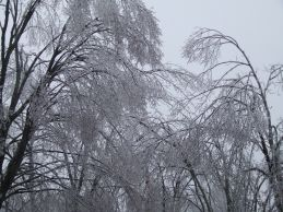 Sagging trees in ice