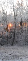 Sunset through icy trees