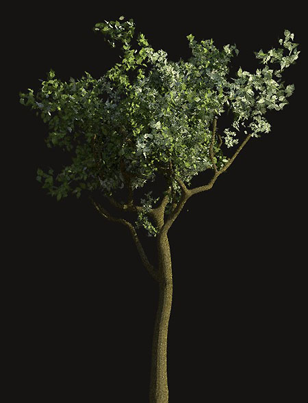 [Tree model created in Blender.  Texture credit Steve Lund.]