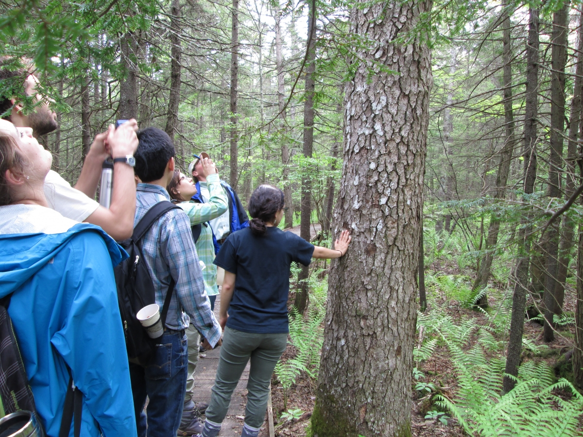 [Students admiring what is possibly the oldest tree on the Harvard Forest property]