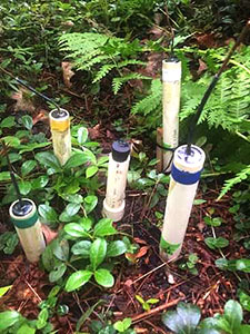 [Redox probes (Sarah assisted in making) installed in the transition zone of the soil moisture gradient. Photo by Sarah Pardi]