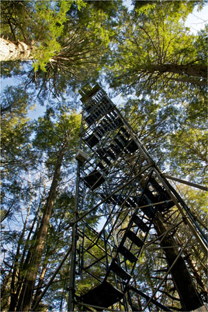 Harvard Forest Hemlock Tower