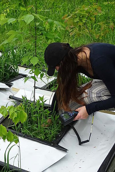 [Measuing the soil moisture around one of our  saplings in Lyford garden.  Photo by Sarah Plisinksi.]