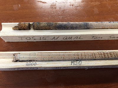 [Mounted and labeled tree cores. The top core is not sanded or dated, while the bottom core has been sanded and its annual rings measured and dated. Photo by Nick Patel]