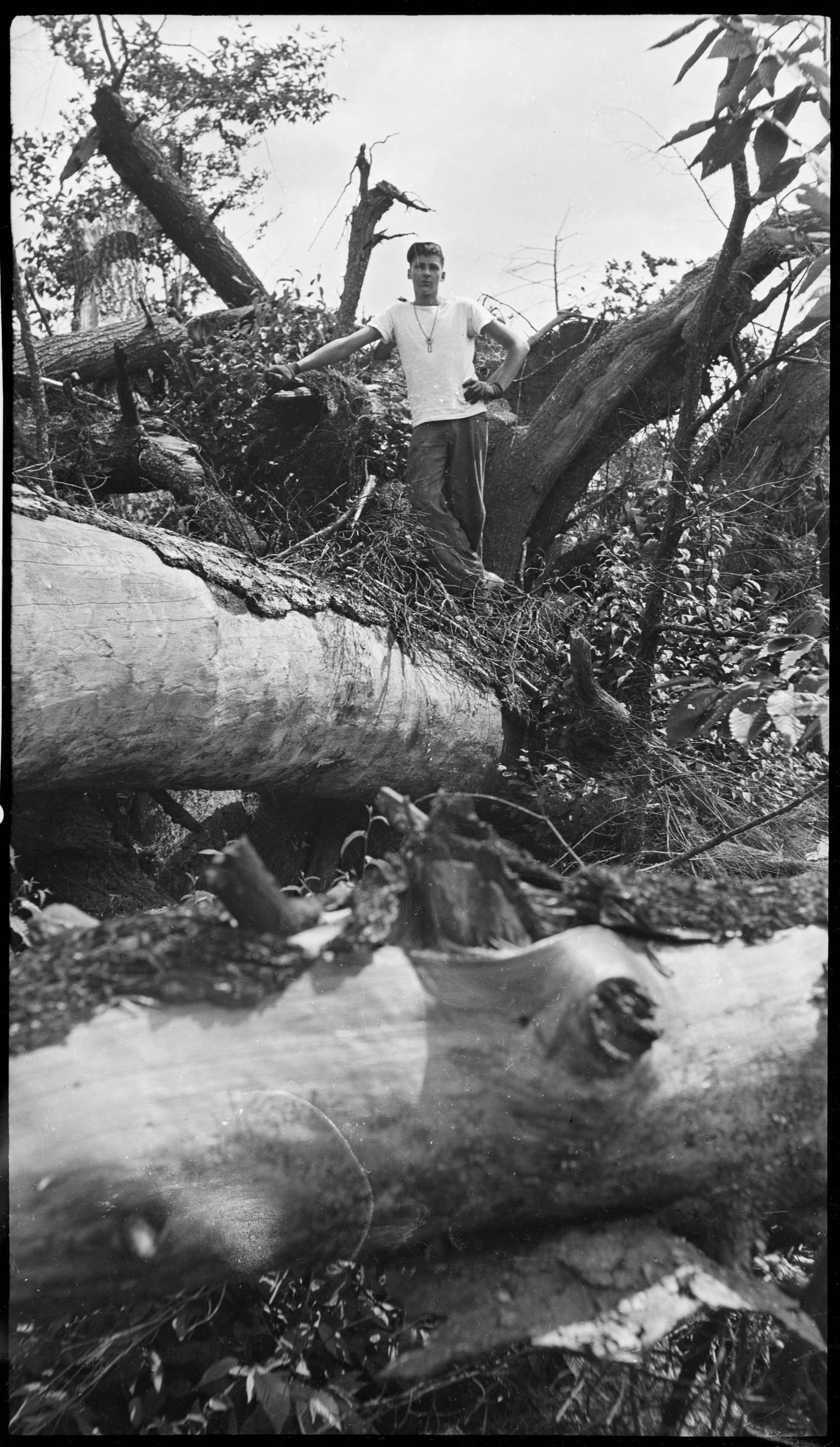 Harvard Forest: Hurricane Damage In The Pisgah Tract