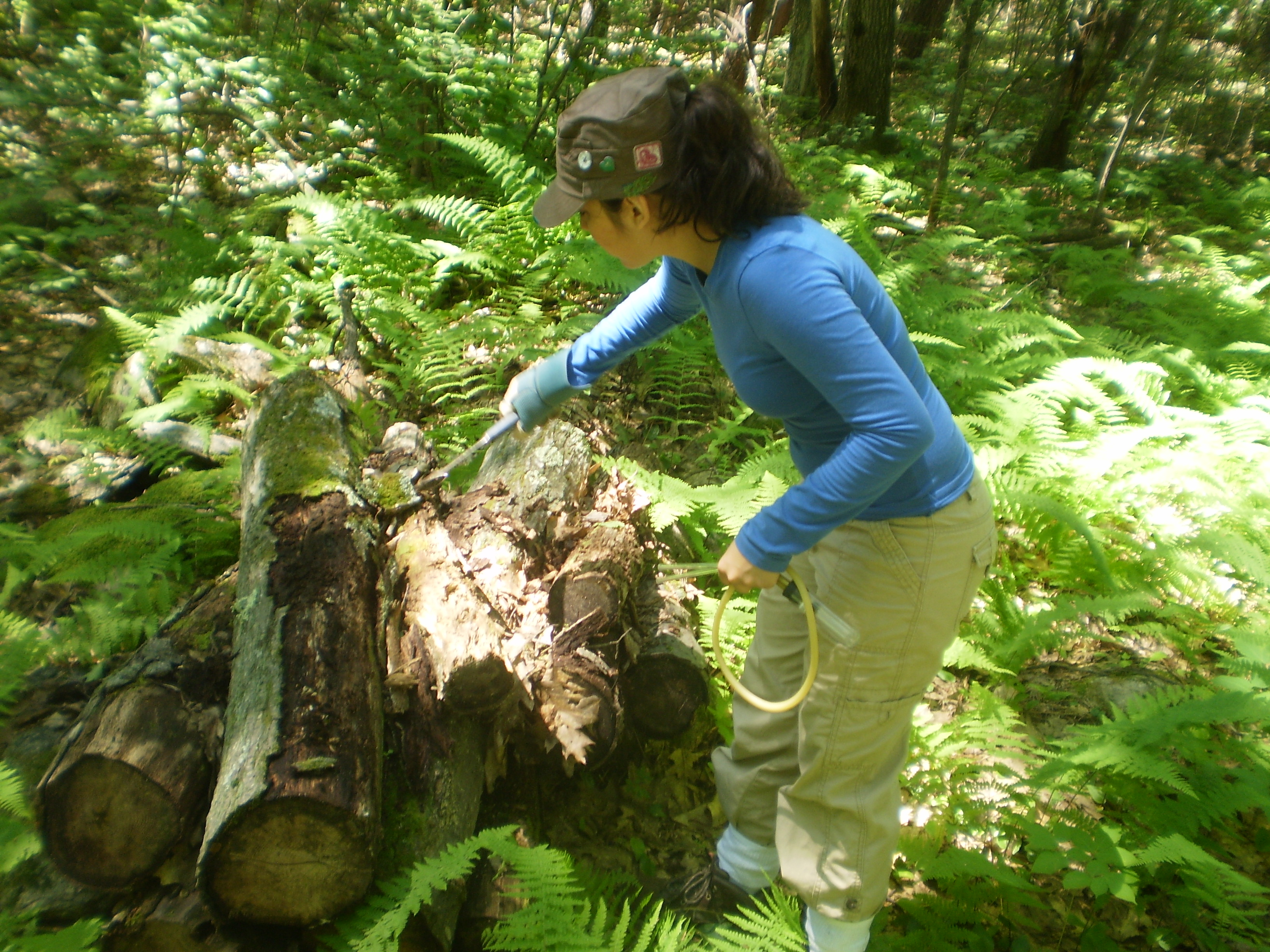 reu opportunities the long term ecological research network the harvard forest summer research program in ecology is an opportunity for students to participate in 11 weeks of mentored paid independent research