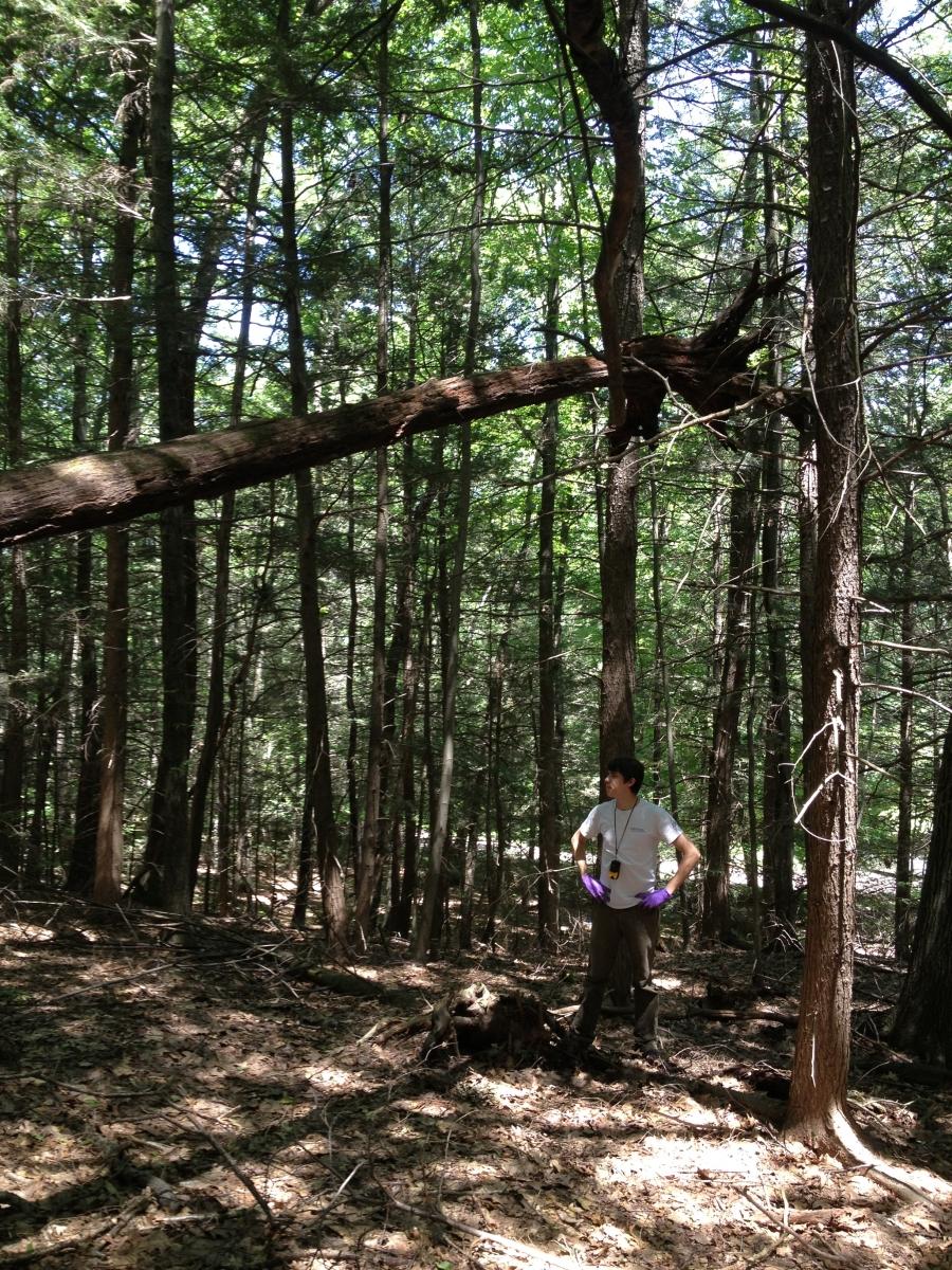 Harvard Forest: Wool-wearing Villains