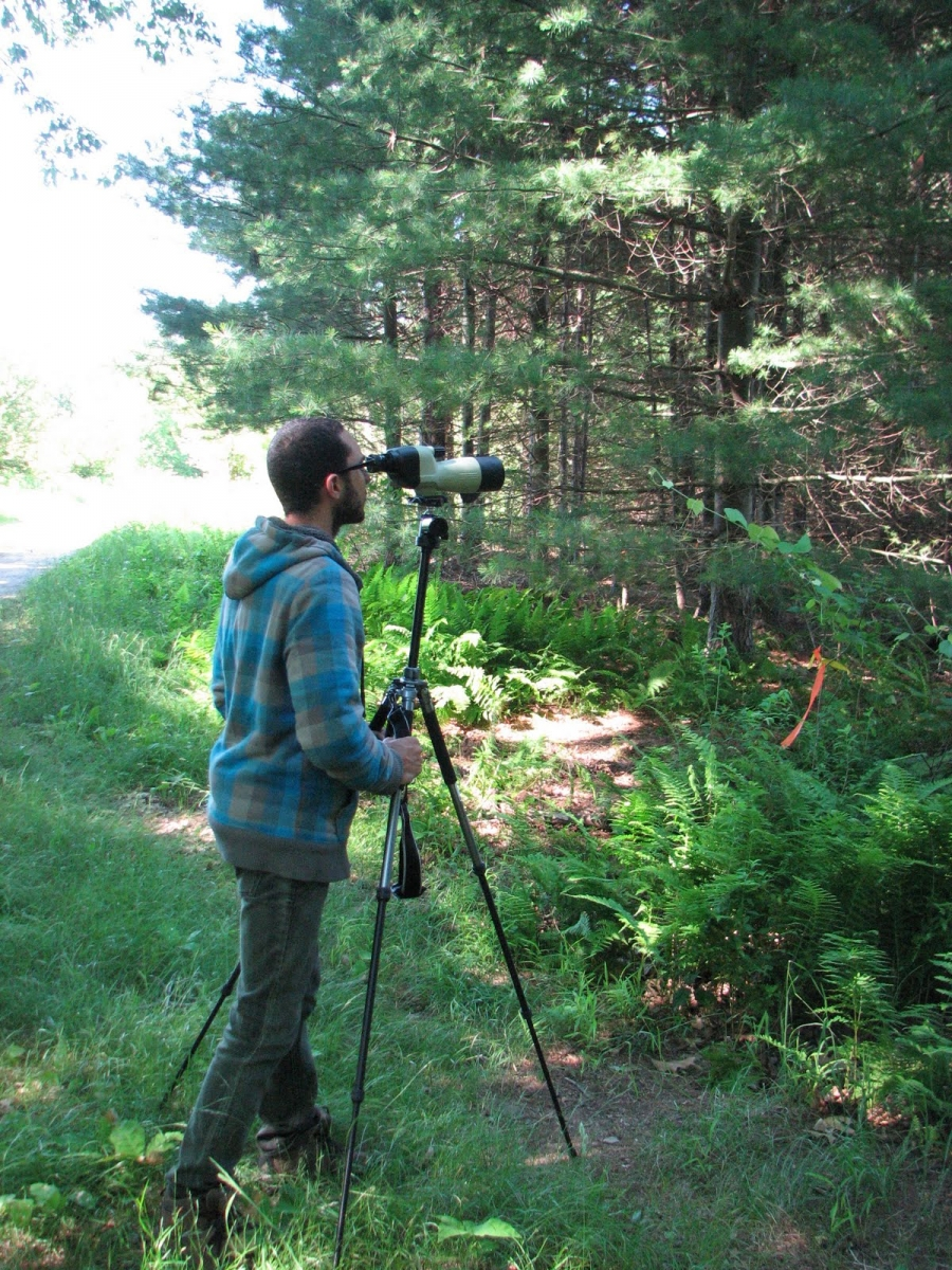 Harvard Forest: Woodpeckers And Tree Care