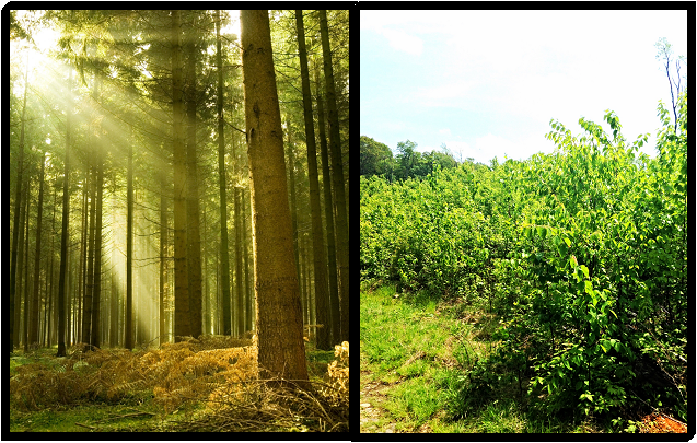 [Where you would think a forest ecologist works (left) and where I actually spend my time (right).]